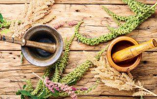 Bylinné terapie v menopauze: 3 bylinky, které pomáhají
