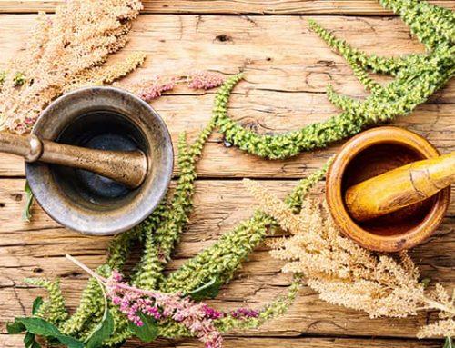 Bylinné terapie v menopauze: 3 bylinky, které musíte vyzkoušet